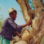 Somali