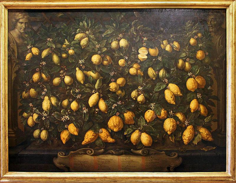 Bartolomeo Bimbi:_Melagoli, cedri e limoni, 1715