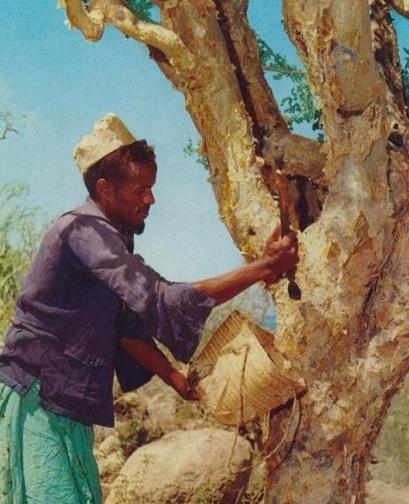 Somali man Myrrh